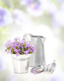 Campanula Flowers Royalty Free Stock Photos