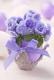 Campanula flowers royalty free stock image