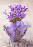 Campanula flowers Royalty Free Stock Photo