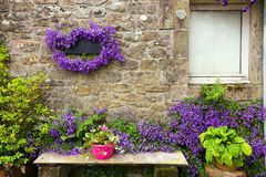 Campanula flowers on granite house wall Royalty Free Stock Photography