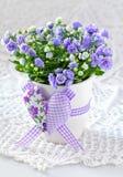 Campanula flowers. Stock Image
