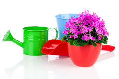 Campanula flowers with watering can, Stock Image