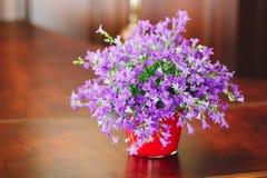 Campanula plant in pot Royalty Free Stock Photography