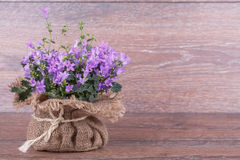 Campanula purple flowers Royalty Free Stock Images