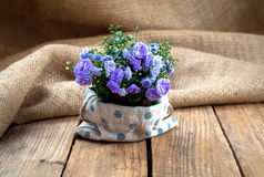 Campanula terry flowers Stock Photography