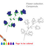 Campanula in vector cartoon to be colored. Royalty Free Stock Image
