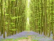 Campanule in legno di Philipshill, Chorleywood, Hertfordshire, Inghilterra, Regno Unito immagine stock