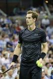 Campeão Andy Murray do grand slam na ação durante o fósforo do círculo do US Open 2015 primeiramente fotografia de stock royalty free