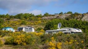 Campeggiatori in rv fra i cespugli della ginestra comune e le scogliere del granito su Bornholm a giugno Immagini Stock
