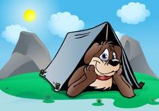 Campeggio del cane del cucciolo del Brown Immagine Stock