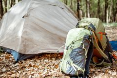 Campeggio nella foresta immagini stock