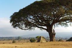 Campeggio selvaggio nella savanna fotografie stock libere da diritti
