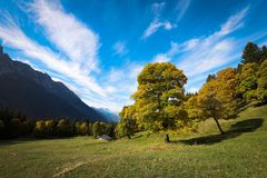 Campelli in Autunno royalty free stock photography