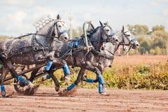 Campeonato da 'troikca' do russo de Rússia Imagem de Stock Royalty Free