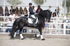 Campeonato de salto do cavalo Imagens de Stock