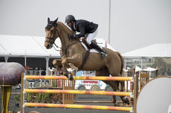 Campeonato de salto do cavalo Fotos de Stock