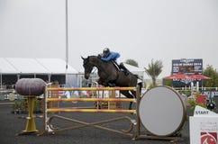 Campeonato de salto do cavalo Imagens de Stock Royalty Free