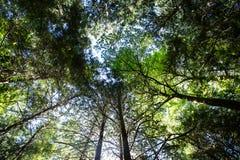 Camper dans la forêt du nord-ouest de Pacfic Photographie stock