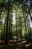 Camper dans le nord-ouest pacfic Photographie stock libre de droits