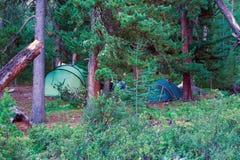 Camper dans une forêt conifére photographie stock