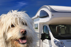 Camper and dog. Perfect holiday Royalty Free Stock Photos