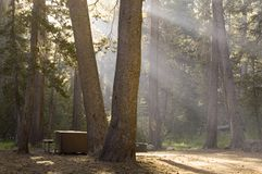 Camper's Morning Stock Photography