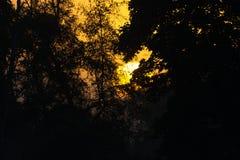 Campercar和日出在沼泽 库存图片