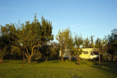 Campers in an orchard. Staging of two campers in an orchard at dawn royalty free stock images