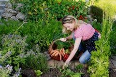 Campesina feliz con una cesta con los carrotts en su jardín Foto de archivo libre de regalías