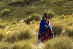 Campesino andino Imagen de archivo