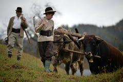 Campesinos que dirigen sus bueyes fotos de archivo libres de regalías