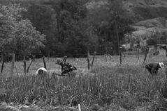 Campesinos que trabajan en su granja foto de archivo