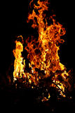 campfire Royaltyfri Bild
