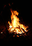 Campfire. Close up. Camping royalty free stock photography