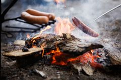 Campfire. Cooking sausages by the campfire royalty free stock photography