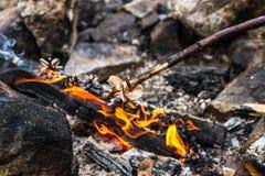 campfire arkivbilder