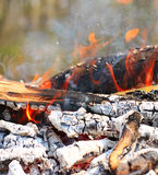 Campfire. Background of Flames and Glowing Embers Royalty Free Stock Image