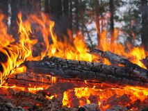 Campfire on background tree Stock Images