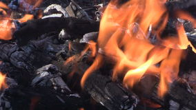 Campfire Burning stock footage