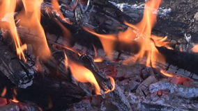 Campfire Burning Close Up stock video footage