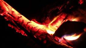 Campfire burning at night closeup stock video footage