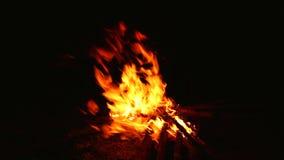 Campfire burning wood stock video