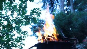 Campfire, burning wood in the forrest stock video footage