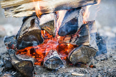 Campfire. The camp-fire of birch wood Royalty Free Stock Photo