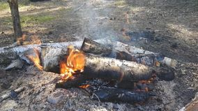 Campfire at camp. In the summer day hd footage stock footage