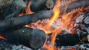 Campfire stock video