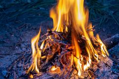 Campfire. Fire for cooking stock image