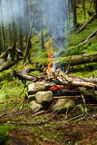 Campfire in the coniferous forest close up. Stock Images