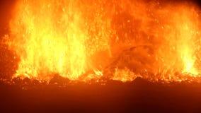 Campfire in dark stock video footage
