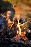 Campfire Detail Royalty Free Stock Photography